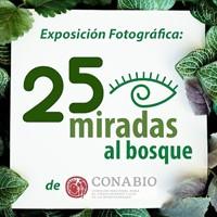 25 miradas al bosque - Exposición Fotográfica