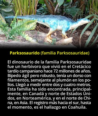 Primer Hallazgo De Parksosaurido En Mexico Los fósiles de dinosaurio descubiertos en méxico tienen una antigüedad que va de 199.6 millones de en cambio la mayoría de fósiles de dinosaurio mexicanos datan del cretácico tardío, con una. ciencia mx